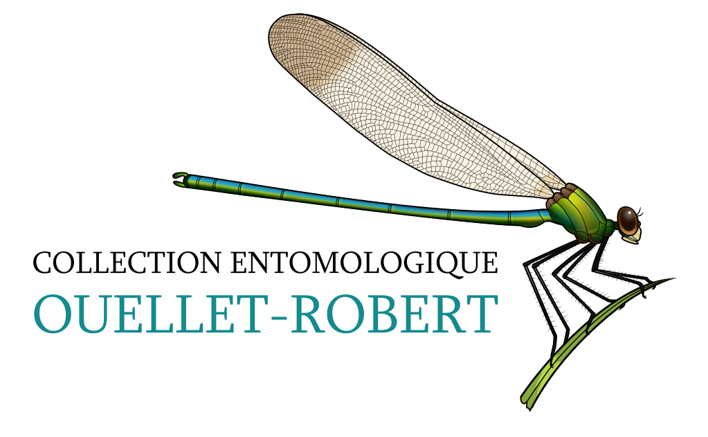 Ouellet-Robert entomological collection (QMOR)