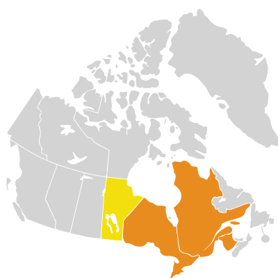 Distribution: Elsholtzia Willdenow