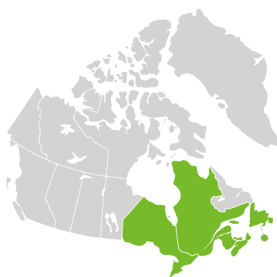Distribution: Osmunda Linnaeus