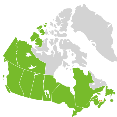 Distribution: Phalaris Linnaeus