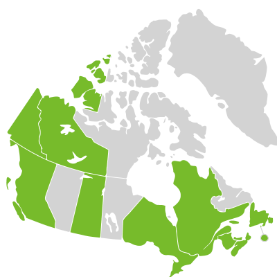 Distribution: Crassula Linnaeus