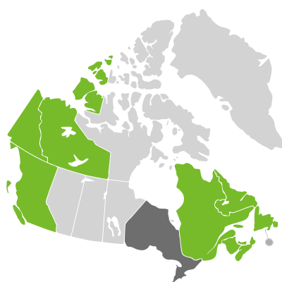 Distribution: Angelica lucida Linnaeus