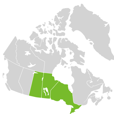 Distribution: Carex assiniboinensis W. Boott