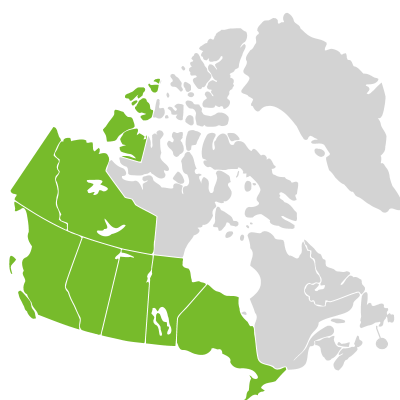 Distribution: Adoxa Linnaeus