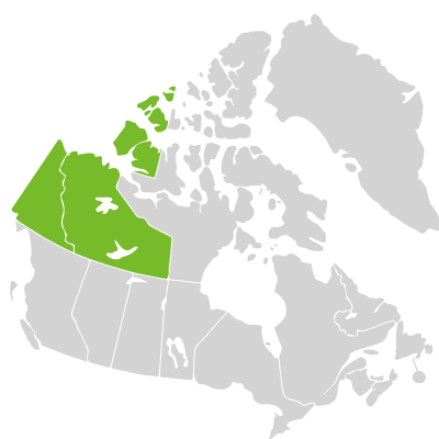 Distribution: Salix hastata Linnaeus