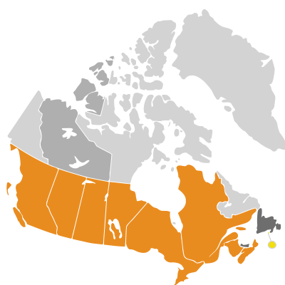 Distribution: Helianthus annuus Linnaeus
